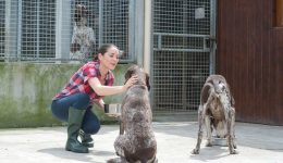 A secure future for boarding Kennels and Catteries